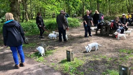 Westies of all ages, shapes and sizes attended the event Picture: TERRY PETTIT