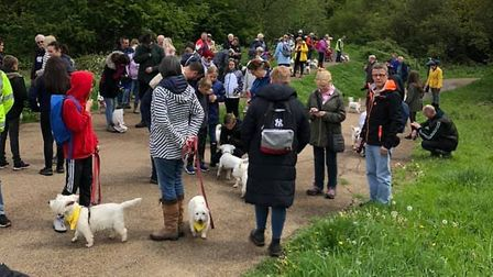 All the money raised goes to charities which help westies Picture: TERRY PETTITT