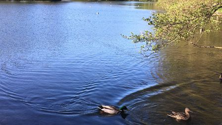 The serene lake, in Boultham Park, which runners skirt on their way around the Lincoln parkrun. Pict