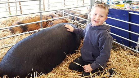 There was a chance for children to see a variety of different animals Picture: RACHEL EDGE