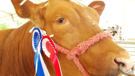 Cattle were on show at the event Picture: RACHEL EDGE