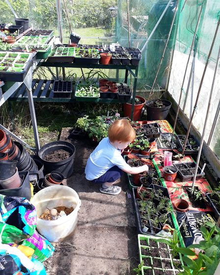Grandson helping out in the greenhouse Picture: DEBORAH ELLAM
