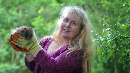 Paula Baker and her partner Kane have been caring for Suffolk's hedgehogs for nine years Picture: SA