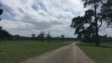 One of three main driveways approaching Shrubland Hall, surrounded by parkland Picture: ANDREW HIRST