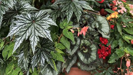 A mixture of indoor plants which can be placed outdoors in summer. Picture: Michael Perry/PA.