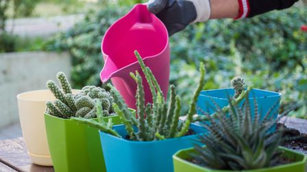 Watering cacti outdoors. Picture credit should read: iStock/PA.