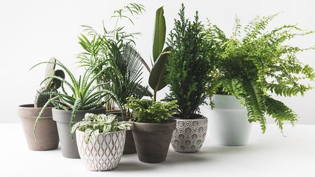 Colourful collection of houseplants. Picture credit should read: iStock/PA.