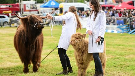 Highland cattle in the grand parade at Hadleigh Show Picture: SARAH LUCY BROWN