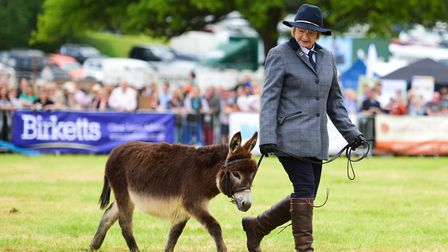 Donkeys in the grand parade Picture: SARAH LUCY BROWN