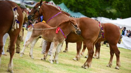 Suffolk Punches and heavy horses wowed the crowds in the grand parade Picture: SARAH LUCY BROWN