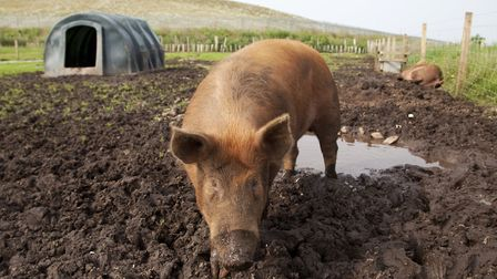 TamwCranswick has reported soaring exports to China after African swine fever wiped out pig herds ac