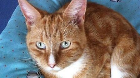 Could you give Freddo the cat a quiet new home? Picture: CONTRIBUTED