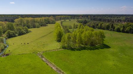 Arable and pasture land at Hall Farm, Bridgham, near Thetford, is being offered up for sale through
