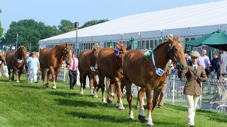 Suffolk Show's Grand Parade - one of the big attractions Picture: SAA