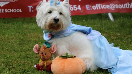 An amazing Cindrella dog at Paws in the Park in Bury St Edmunds Picture: ST NICHOLAS HOSPICE