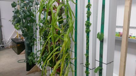 Aponic's vertical growing system Picture: JASON HAWKINS-ROW