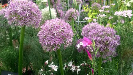 The tranquillity of flowers - a colourful display in the flower tent. Picture: Sue Foster