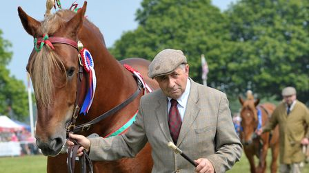 Roger Clark walking with his Suffolk Punch in the Grand Parade on the final day of the Suffolk Show