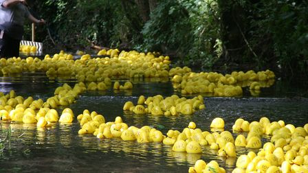 Ducks in the water for the Combs Ford duck race Picture: MARK LANGFORD