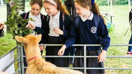 Children feeding a goat at Essex Schools Food & Farming Day Picture: VICKY HOLMES PHOTOGRAPHY