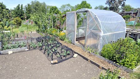 Bridge Street allotments in Hadleigh. Strange break-ins have left gardeners confused Picture: SU AND