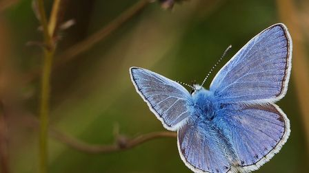 He was a beautiful butterfly Picture: HEDLEY D WRIGHT