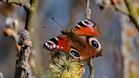 A beautiful butterfly. Picture: CHRISTOPHER CROSS