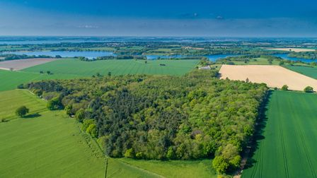 Woodley Wood on the Shotley Peninsula is up for sale Picture: KEVIN SNELL