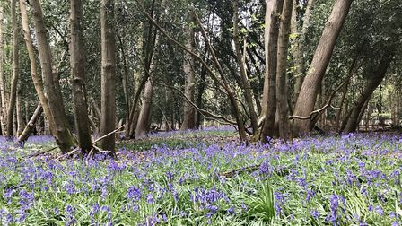Woodley Wood on the Shotley Peninsula is up for sale Picture: TOM CLOVER