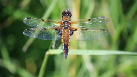 WINNER - Dragon fly at Lackford Lakes Picture: MICK WEBB