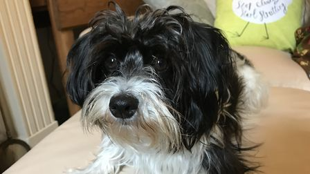 Pickles was bred on a puppy farm in Norfolk Picture: ELLA WILKINSON