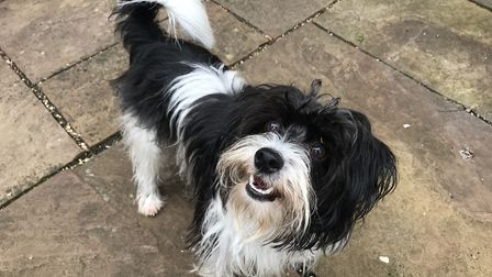Pickles was bred on a puppy farm in south Norfolk Picture: ELLA WILKINSON