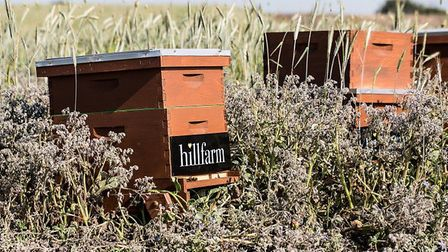 Beehives at Heveningham Picture: EAST OF ENGLAND CO-OP