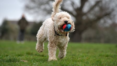 Dudley the dog in Christchurch Park, which has been shortlisted to be named as the best park in the