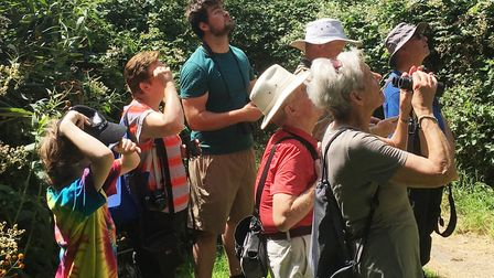 Trying to pick out the elusive white-letter hairstreak in the treetops Picture: Ross Bentley