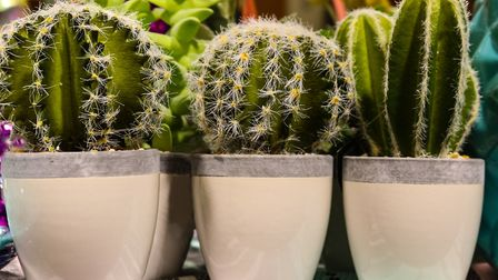 Adding interest with cacti. Picture: iStock/PA