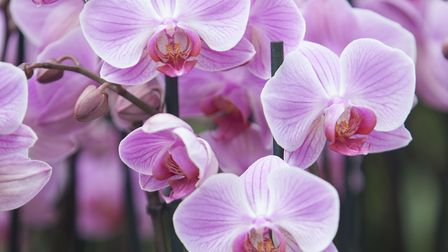 The striking colours of an orchid. Picture: iStock/PA..