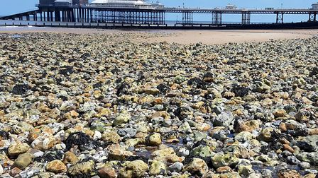 I managed to drag myself away from Cromer's rockpools - I had a train to catch! Picture: PAUL GEATER