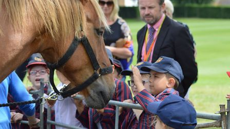 Suffolk Punch foal Colony Vee visited St Joseph's in Ipswich for Suffolk Day PIcture: LUCY BOLTON
