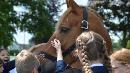 Pupils from St Joseph's in Ipswich got the chance to meet a ten-year-old Suffolk Punch foal PIcture: