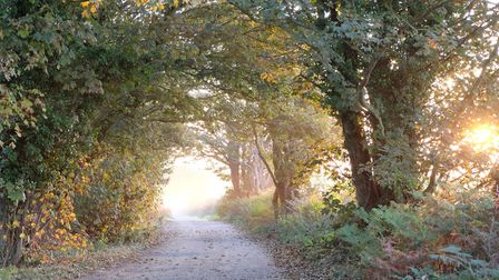 The Broom Covert site within the Suffolk Coast & Heaths AONB Picture: BRIDGET CHADWICK