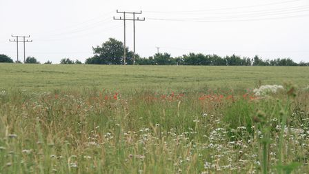 Skylark Fields, off Station Road in Long Melford, on which developer Gladman wants to build 150 home