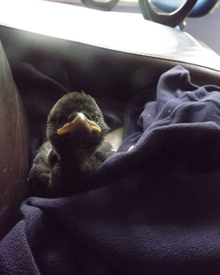 Bowza helped save the life of little Jackdaw Bondi Picture: DON COX