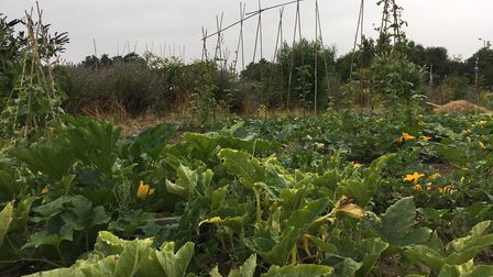 Gardens and allotments across Suffolk have been targeted by an unknown number of offenders. Picture: