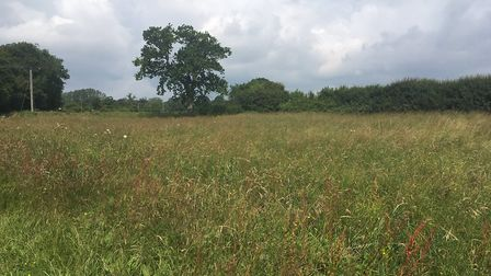 A wildflower meadow at EJ Barker & Sons family farm at Westhorpe Picture: SARAH CHAMBERS