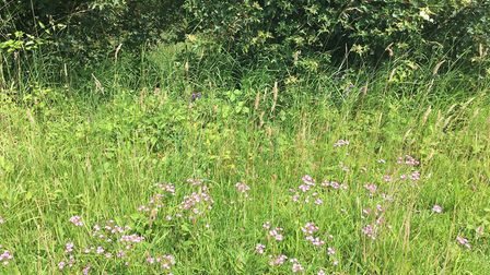 A wildflower margin at EJ Barker & Sons family farm at Westhorpe Picture: SARAH CHAMBERS