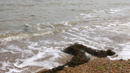Seaweed washed up on the shores of Felixstowe beach Picture: RACHEL WELLS