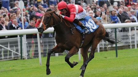 Tiggy Wiggy went on to big things after winning the Weatherbys Super Sprint at Newbury back in 2014.