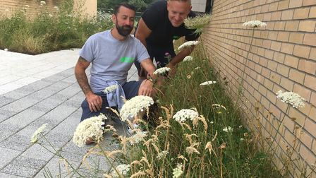 Craig Lee and Paul Hebditch from Greener Growth check on a wild flower area at Riduna Park business