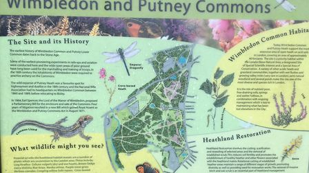 Wimbledon and Putney Commons, the home of the second oldest parkrun in the world. Picture: CARL MARS